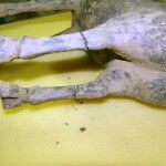 Repaired Han Dynasty Horse